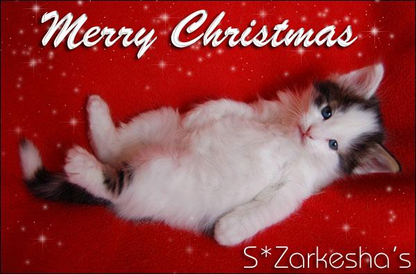 S*Zarkesha's